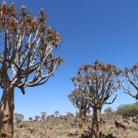 Road trip Namibie #3 : Keetmanshoop et la Quitrees Forest