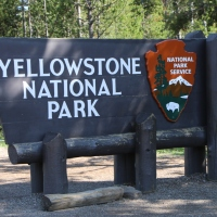 Yellowstone National Park - Road trip Ouest Canada et USA #9