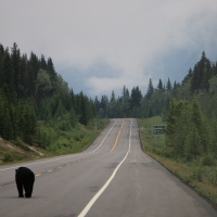 Notre road trip des Rocheuses Canadiennes à Yellowstone